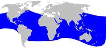 Cetacea_range_map_Blainvilles_Beaked_Whale
