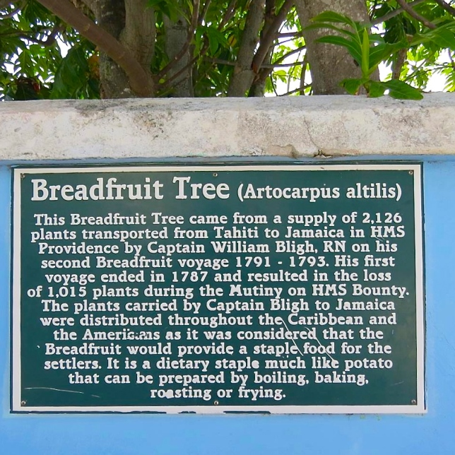 Breadfruit Tree Notice, Hope Town Abaco (Dp Paterson