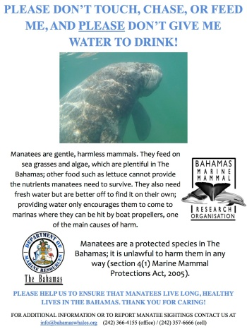 Manatee Awareness Poster jpg