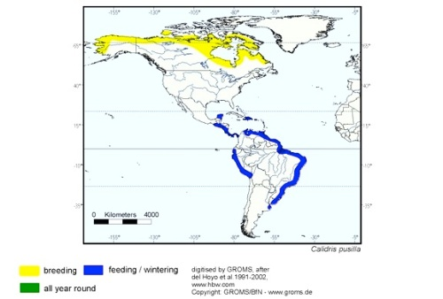Semipalmated Sandpiper distribution map (Avibirds.com)