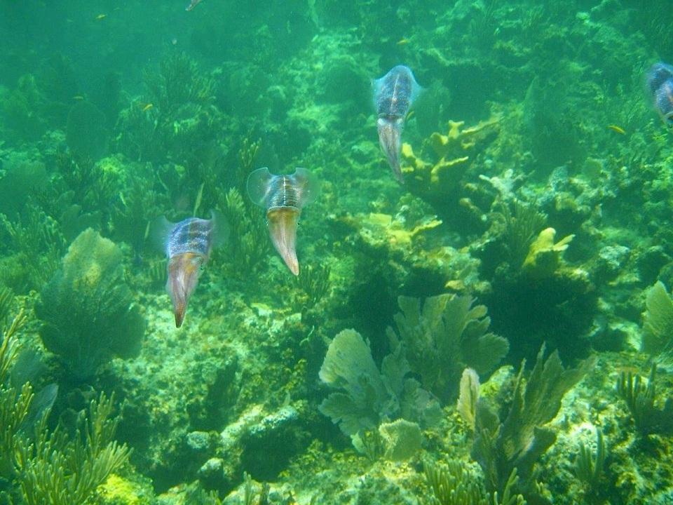 Squid Fowl Cay, Abaco Ellen Sokol, Kiskeedee Sailing Charters