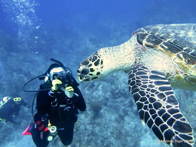 Hawksbill Turtle & photo ©Melinda Riger @ G B Scuba