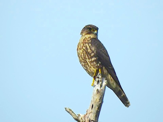 Merlin, West End Grand Bahama (Linda Barry-Cooper)
