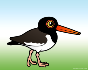 american-oystercatcher (Birdorable)