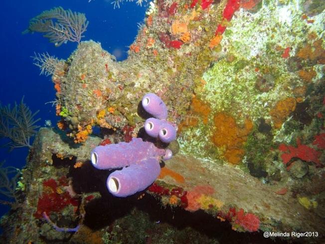 Corals ©Melinda Riger @ G B Scuba copy 2