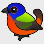 painted-bunting copy
