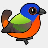 painted-bunting