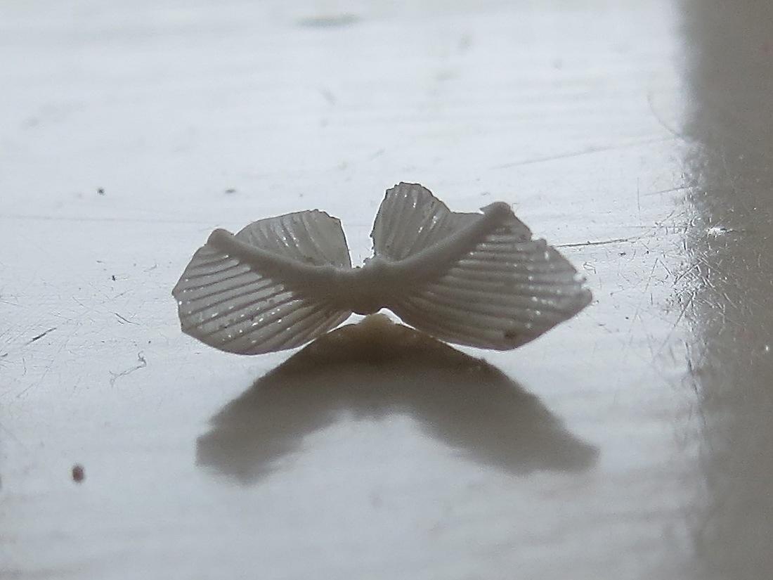 Sand Dollar Doves (Keith Salvesen) 3