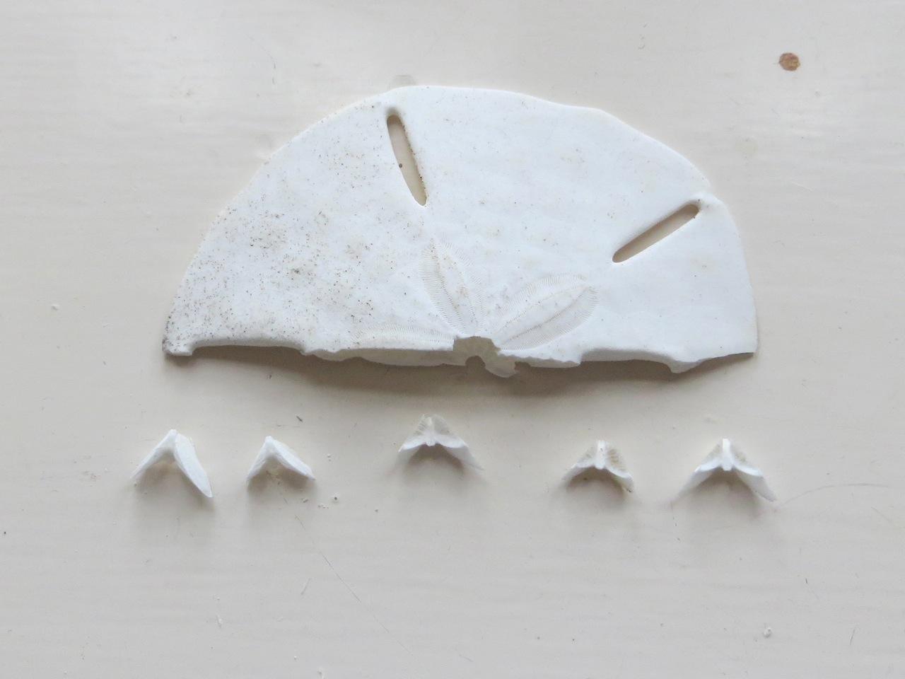 Sand Dollar Doves (Keith Salvesen) 6