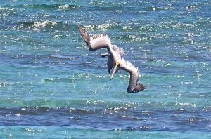 Pelican Dive, Sandy Point Abaco (Keith Salvesen) 04