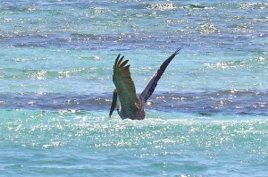 Pelican Dive, Sandy Point Abaco (Keith Salvesen) 06