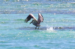 Pelican Dive, Sandy Point Abaco (Keith Salvesen) 07