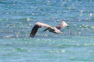 Pelican Dive, Sandy Point Abaco (Keith Salvesen) 08