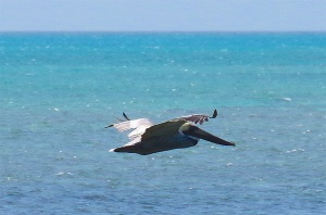 Pelican Dive, Sandy Point Abaco (Keith Salvesen) 12