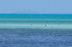 Pelican Dive, Sandy Point Abaco (Keith Salvesen) 13