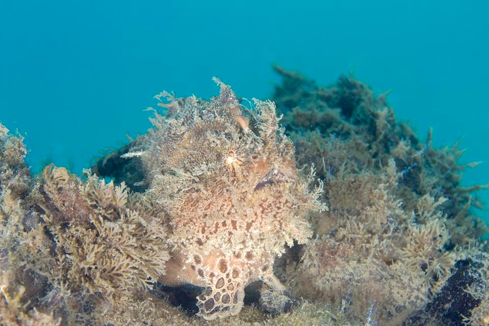 Frogfish Hunting (Adam Rees : Scuba Works)