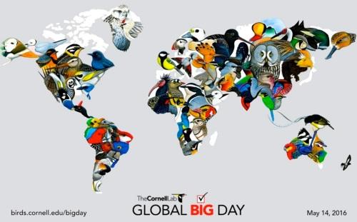 Global Big Day Flyer (Cornell Lab)