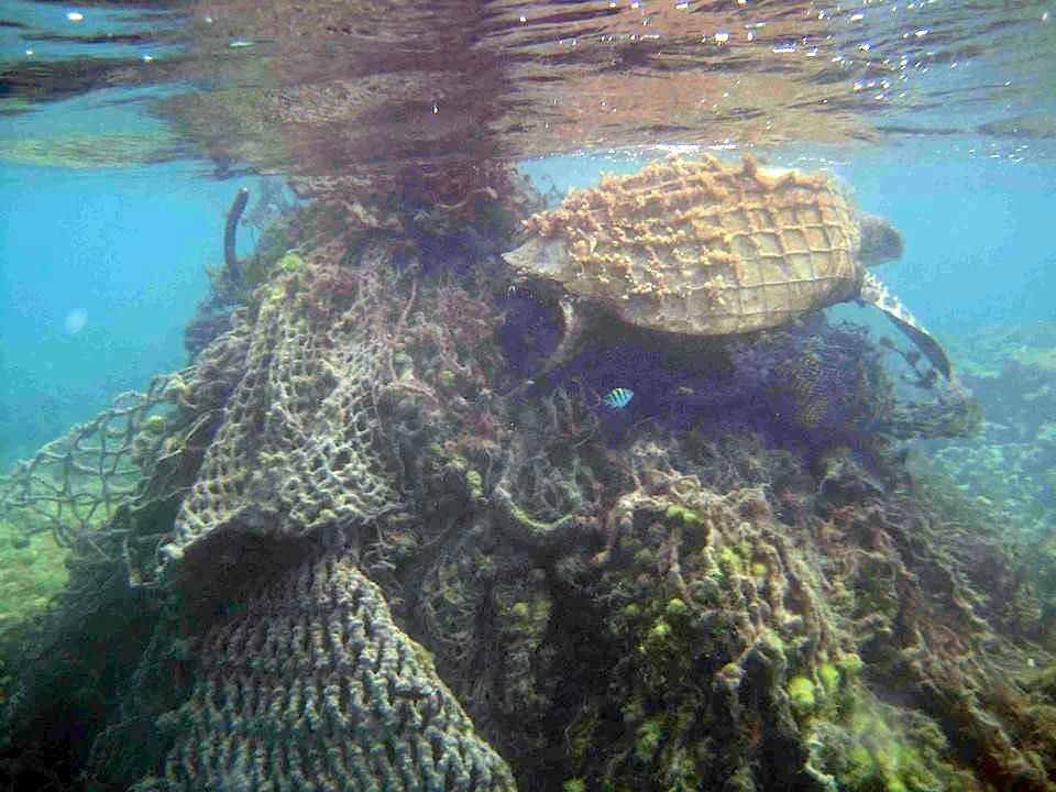 Sea turtle trapped in abandoned fishing gear (NOAA)