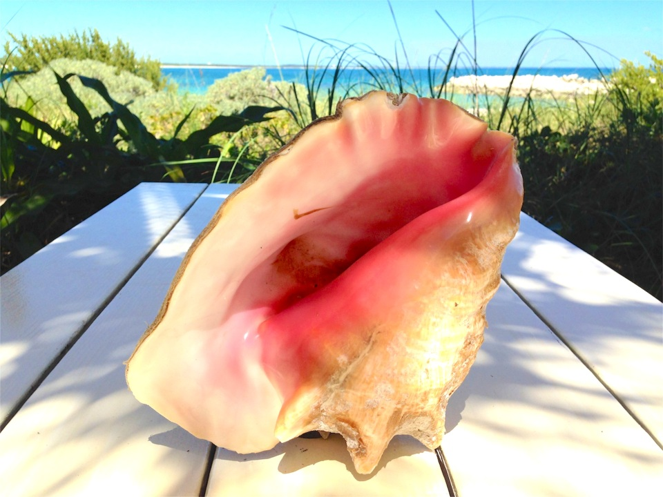 Conch Shells, Abaco (Keith Salvesen) 1