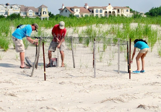 Piping Plover nest exclosure, New Jersey (CWFNJ)