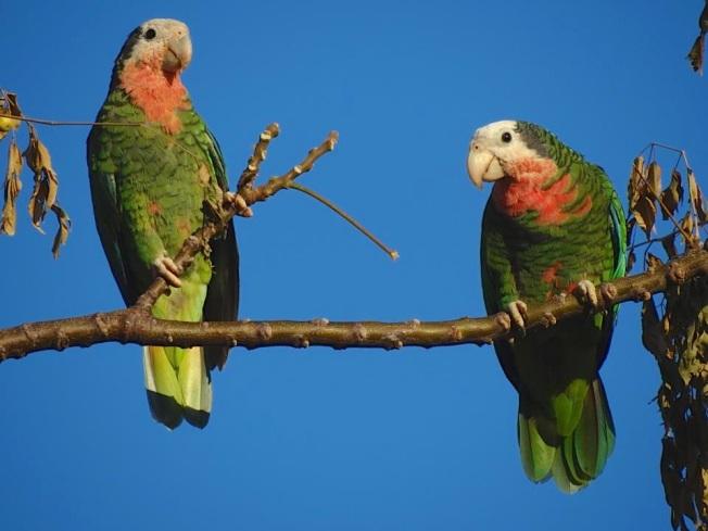 Nassau Parrots (2 of 5) Melissa Maura