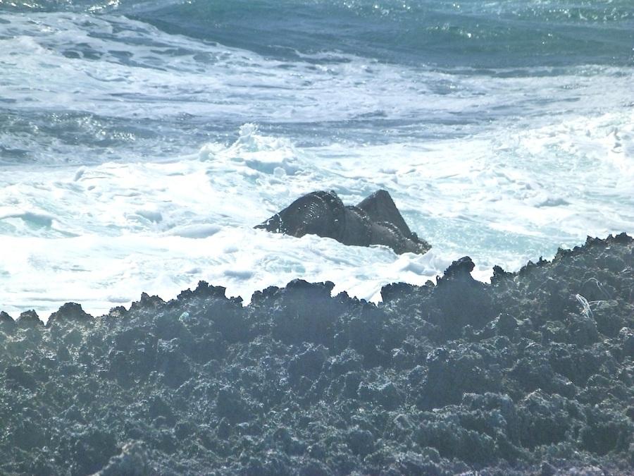 SS Hesleyside (wreck), Schooner Bay Abaco (Keith Salvesen) O3