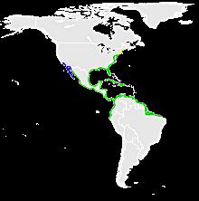 egretta_tricolor_map-svg