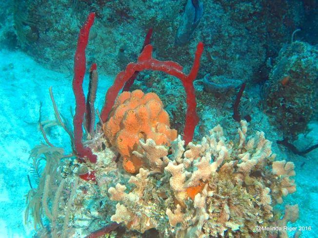 coral-reef-2-melinda-riger-g-b-scuba