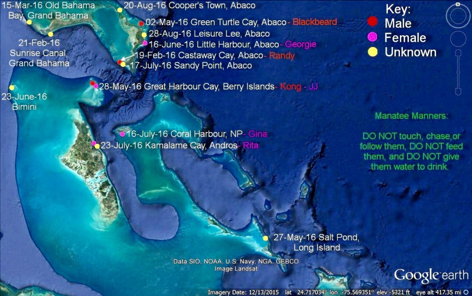 Bahamas Manatee sightings infographic (BMMRO / Felice Knowles)