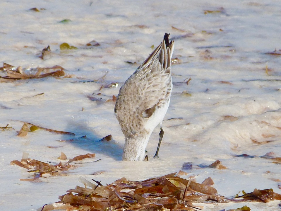 sanderling-on-delphi-beach-abaco-keith-salvesen-1