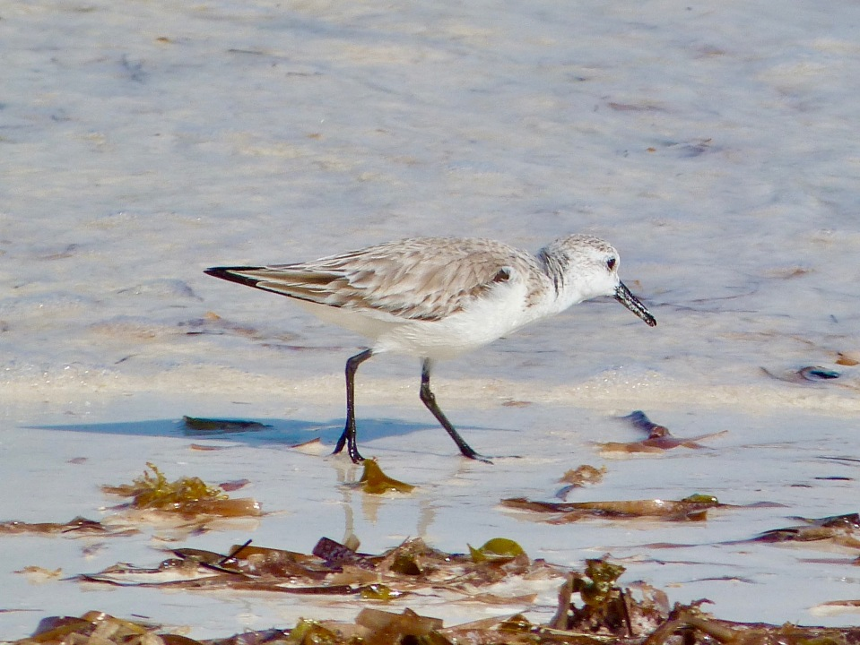 sanderling-on-delphi-beach-abaco-keith-salvesen-2