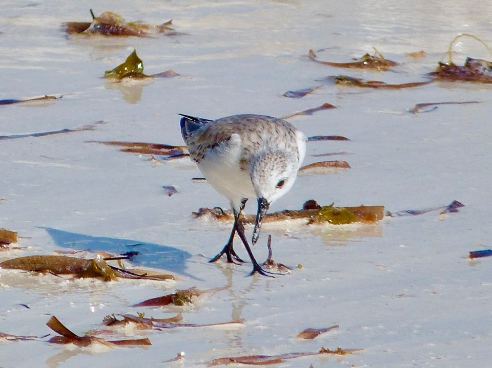 sanderling-on-delphi-beach-abaco-keith-salvesen-3