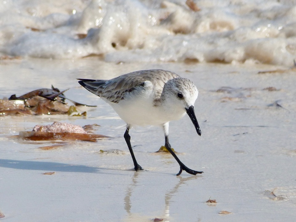 sanderling-on-delphi-beach-abaco-keith-salvesen-4
