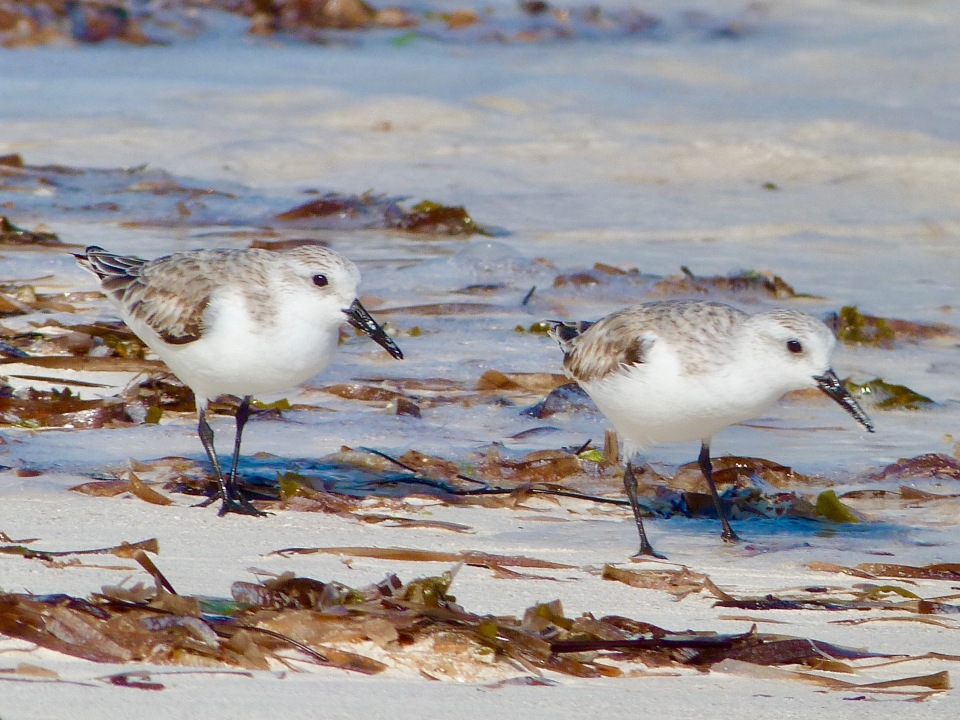 sanderling-on-delphi-beach-abaco-keith-salvesen-6
