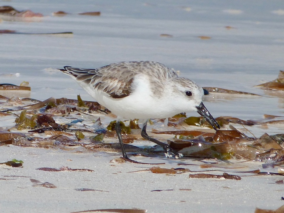 sanderling-on-delphi-beach-abaco-keith-salvesen-7