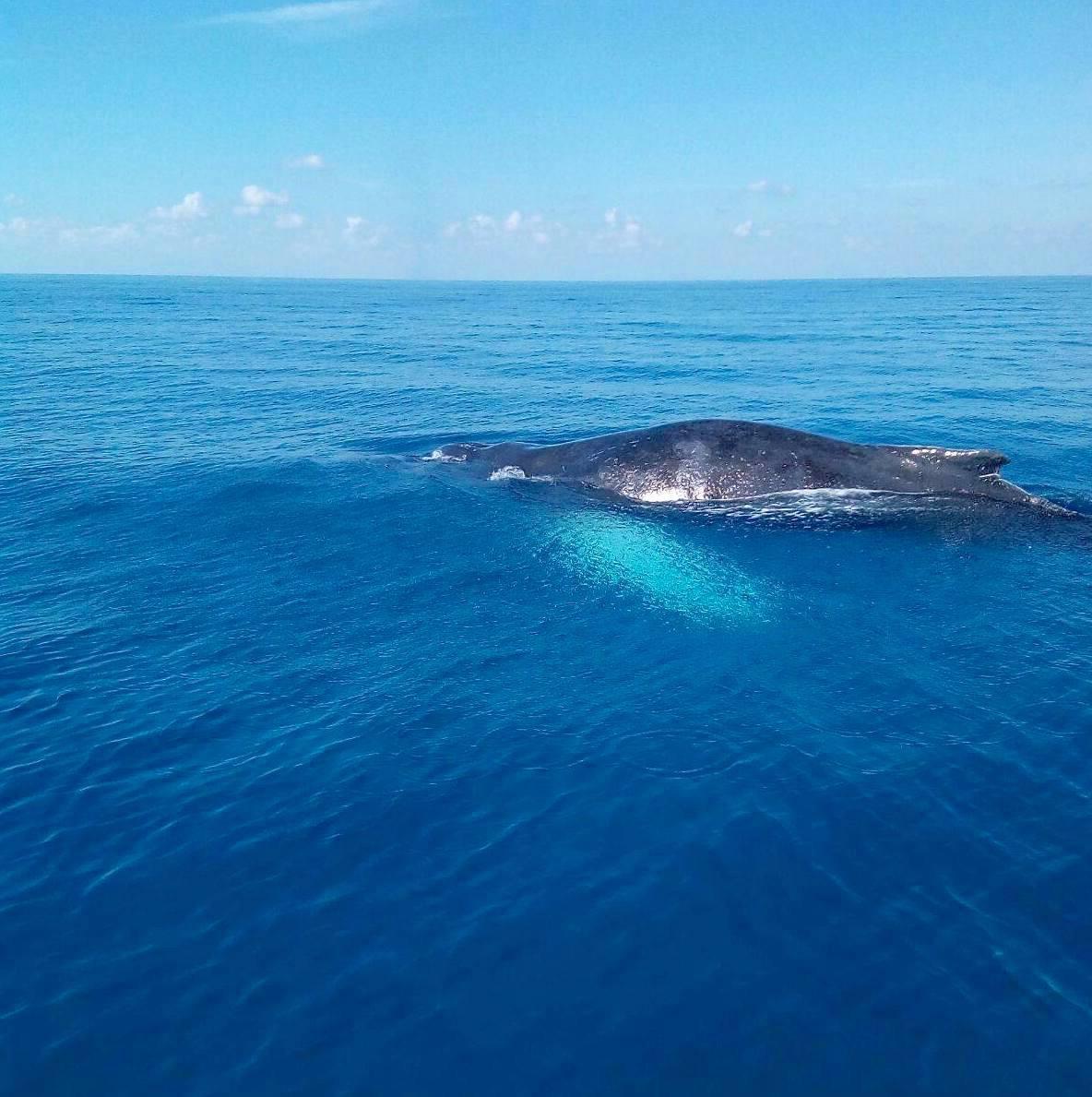 bmmro-humpbacks-1