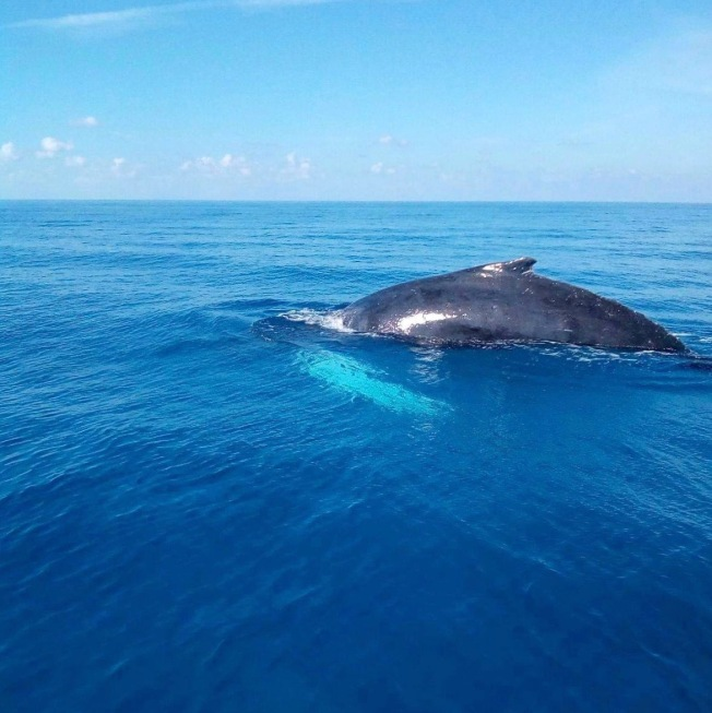 bmmro-humpbacks-2