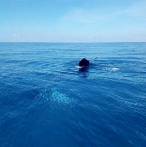 bmmro-humpbacks-3