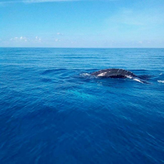 bmmro-humpbacks-4