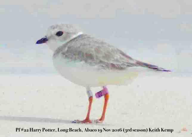 Harry-Potter-pf22-Long Beach, Abaco, Keith Kemp 19-11-16
