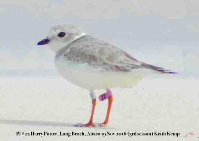 Harry-Potter-pf22-Long Beach, Abaco, Keith Kemp 19-11-16