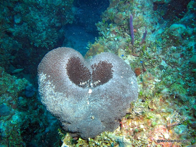 heart-shaped-sponge-melinda-riger-gb-scuba