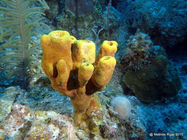 sponge-melinda-riger-gb-scuba