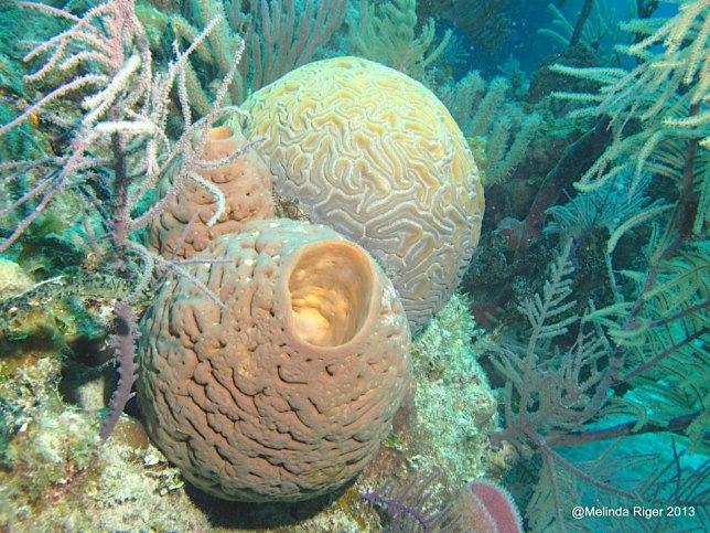sponges-and-coral-on-the-reef