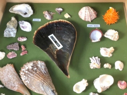 Cherokee Shell Museum, Abaco Bahamas / Gifts from the Sea / Abaconian