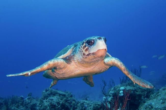 Sea Turtle - Adam Rees / Scuba Works