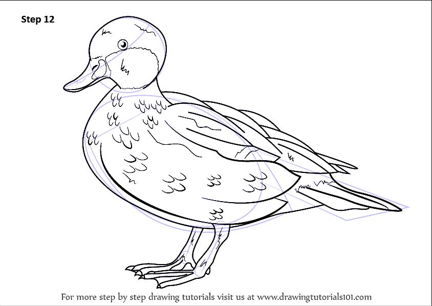 Bahamas Ducks | ROLLING HARBOUR ABACO