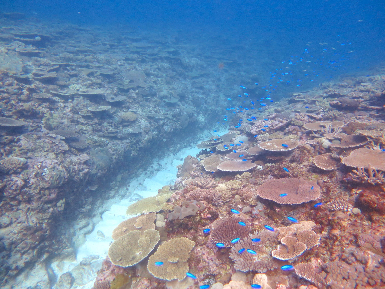 Coral reef research, Australia (Oscar Ward)