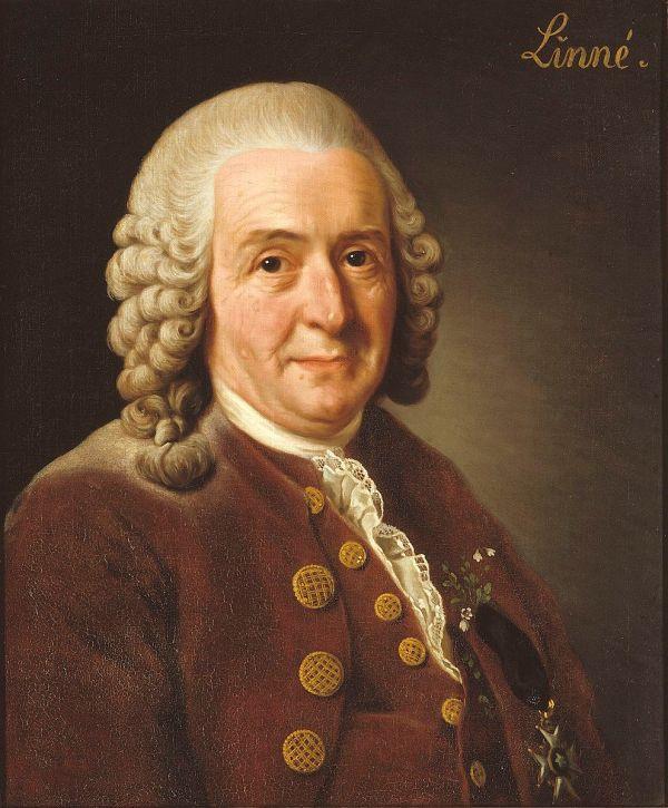 Carl Linneaus Portrait (OS)