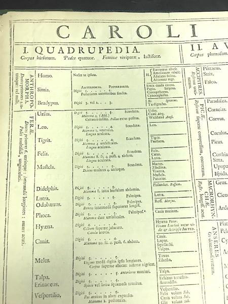 Systema Naturae 1735 - quadrupeds (© KS / Rolling Harbour)